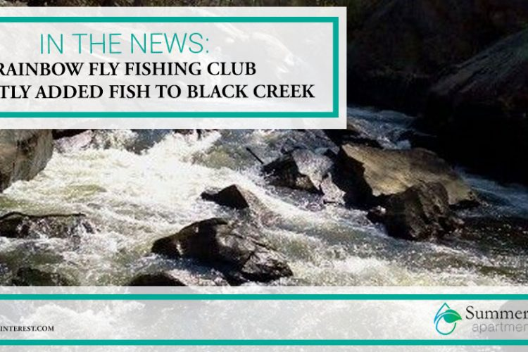 In the News: Rainbow Fly Fishing Club Recently Added Fish to Black Creek