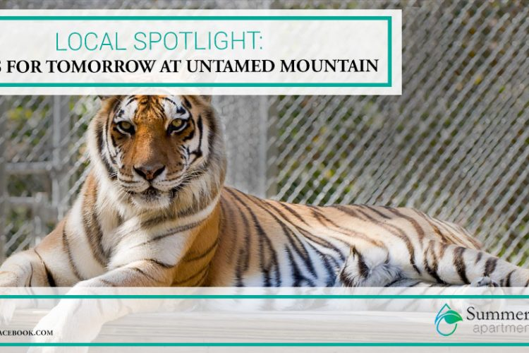 Local Spotlight: Tigers for Tomorrow at Untamed Mountain