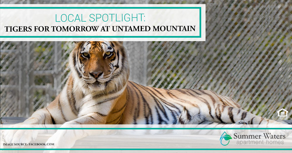 Tigers for Tomorrow at Untamed Mountain