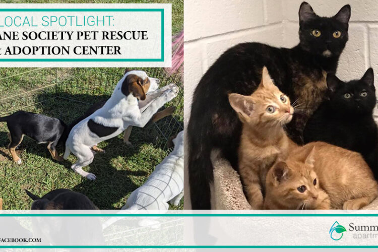 Local Spotlight: Humane Society Pet Rescue & Adoption Center
